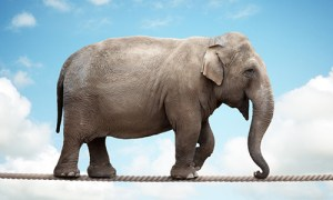 Elephant-learning-a-new-skill-3d88e678b0052e68cecbc1598132d2412dc00844