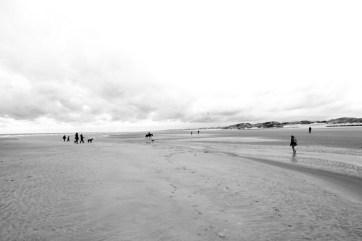 Cheval- chien plage