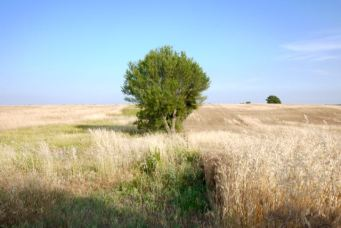 Arbre dans les herbes