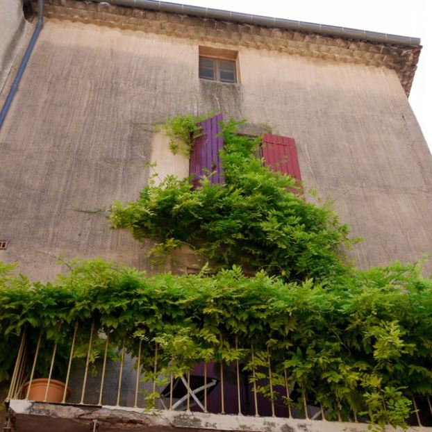 Plante grimpante sur un mur