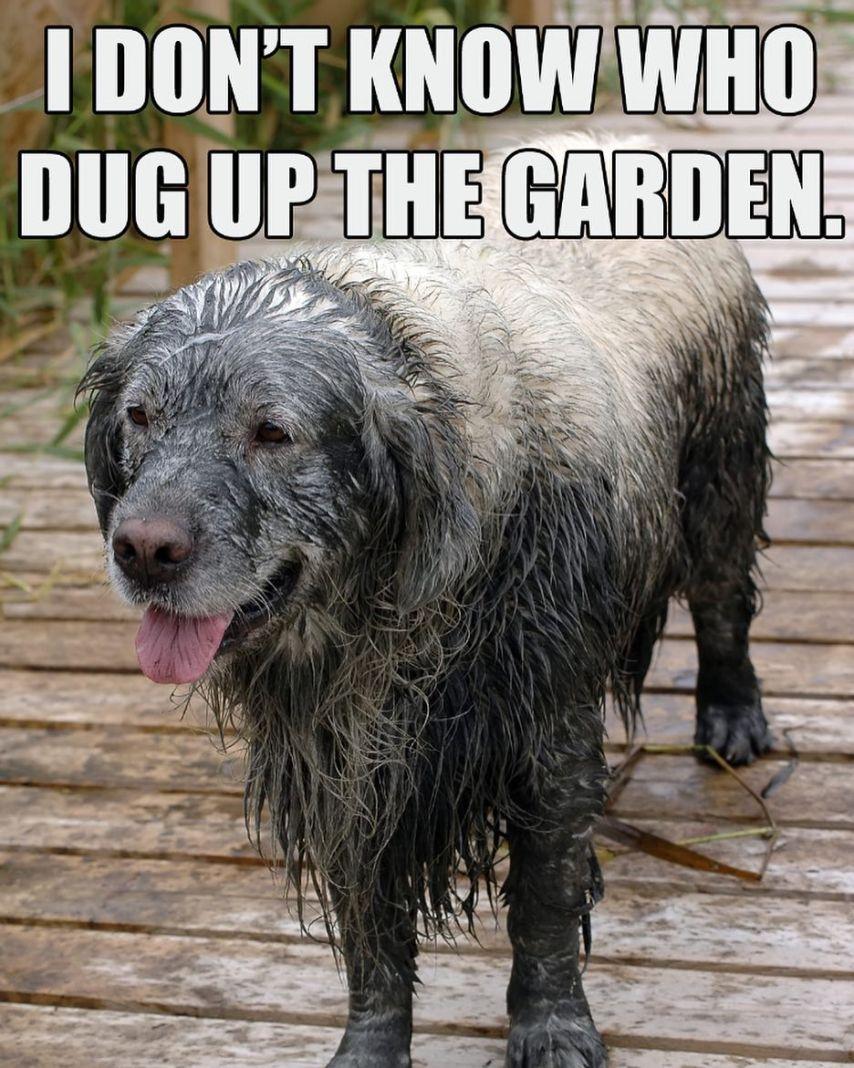 Annoying dog image