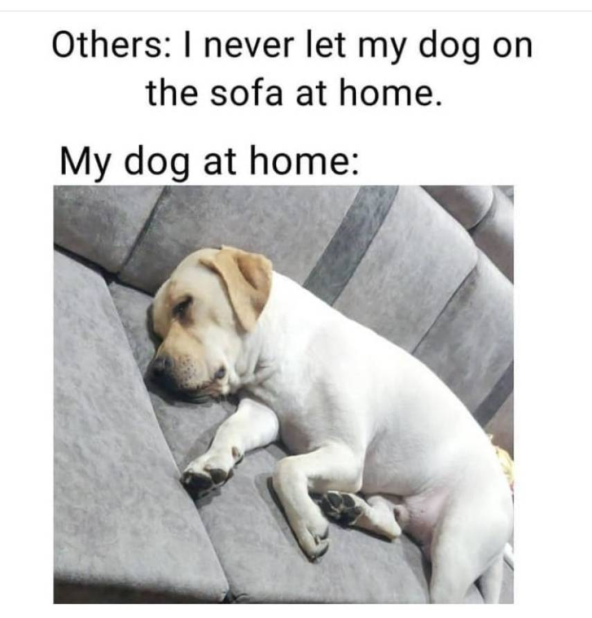 funny lazy dog memes