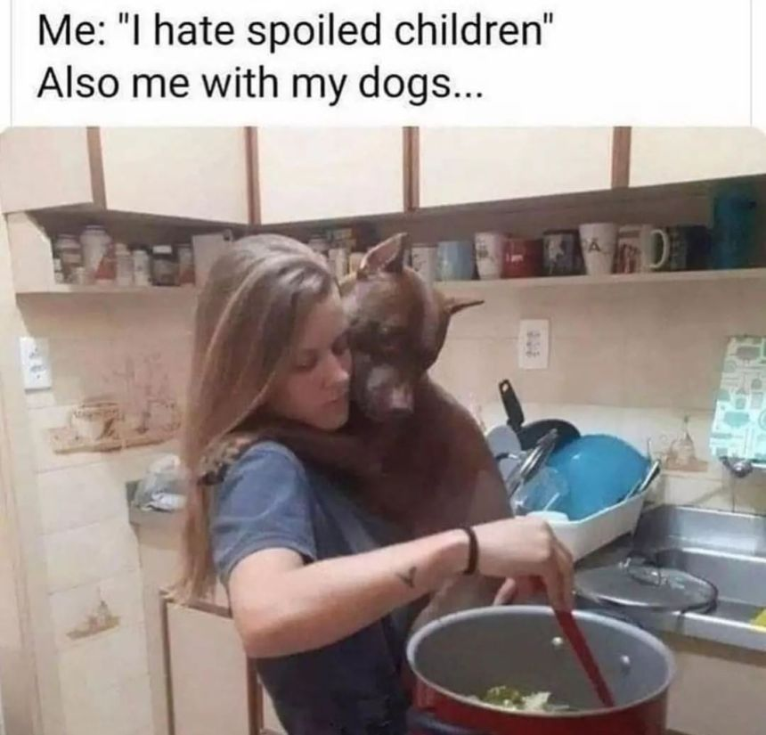 relatable dog owner memes