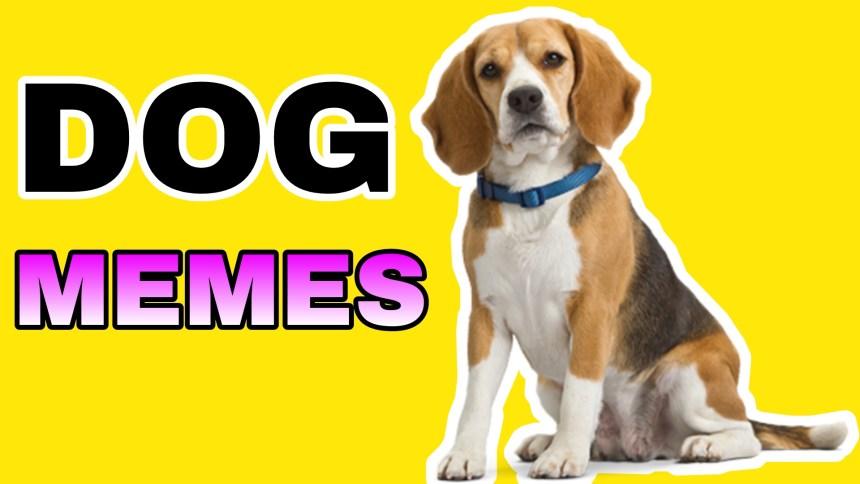 15 Funny Dog memes