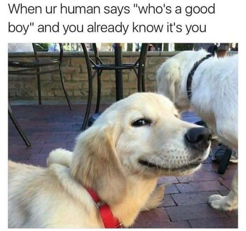 Good boy meme