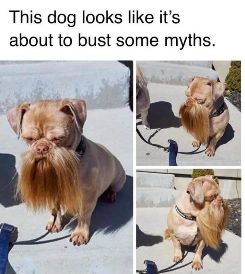 smiling dog face meme