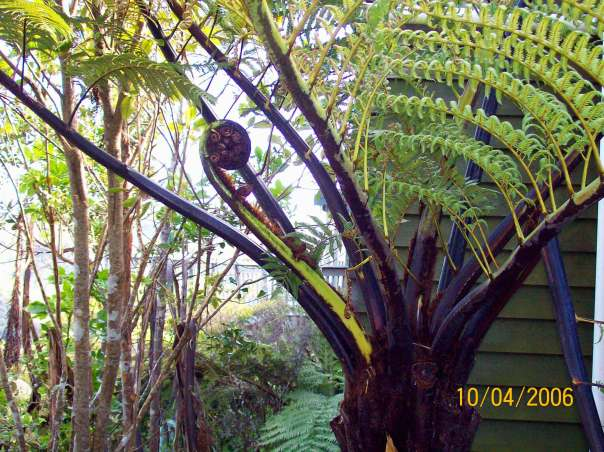 It's been feeling tropical in NH, but this is a photo I took in New Zealand of a really, really big fern
