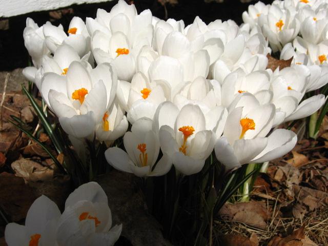 springness