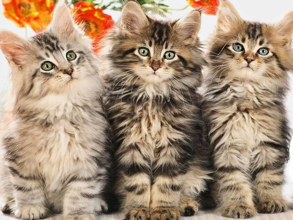 Cute pussies