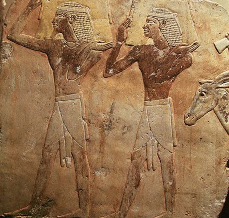 Egyptian Penis Care