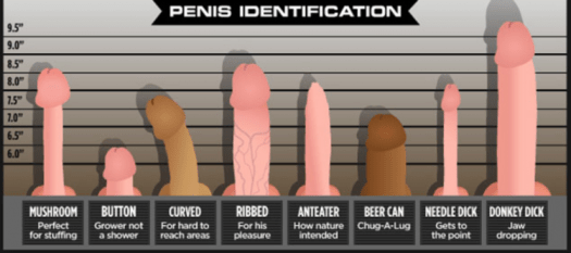 Types of Different Penises