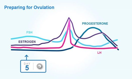 Hormones during ovulation preparation graph