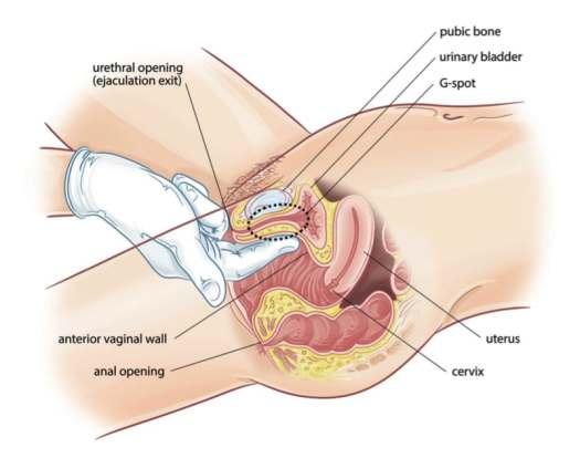 Female Orgasms