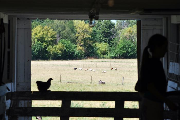 Kinkoona Farm, Brodhead, WI