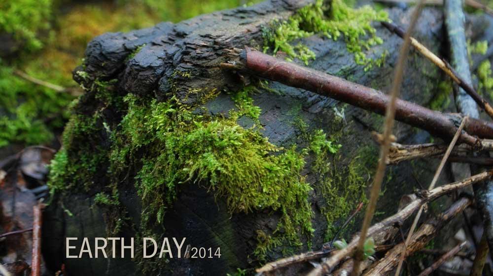 Moss growing on log in Glacial Drumlin Bike Trail, Jefferson Co., Wisconsin