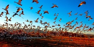 orientacion-aves-migracion