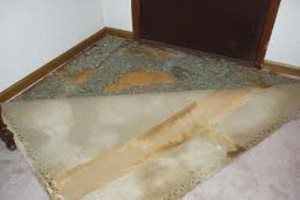 pet stained carpet and padding