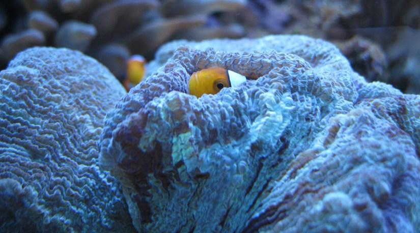 setting up a saltwater reef tank aquarium