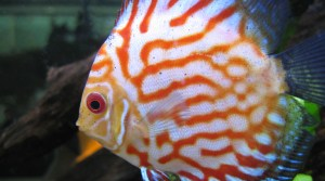 best wat to keep discus