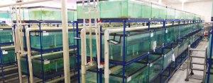 Fish Wholesaler