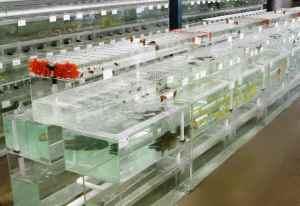 Aquarum Fish Importer