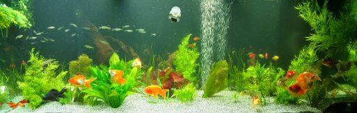 best aquarium websites