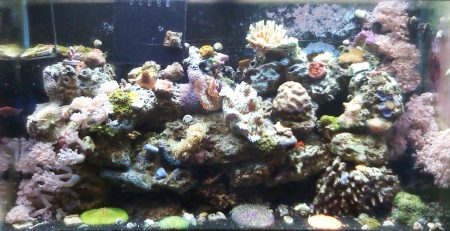 how to set up a reef tank