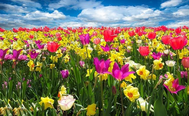 Сезон Лято цветови анализ