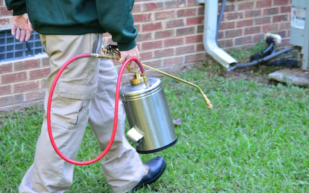 Pest Control Myths Squashed