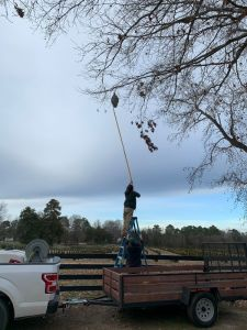 Advance Tree & Shrub removes a large beehive hanging from a tree branch.