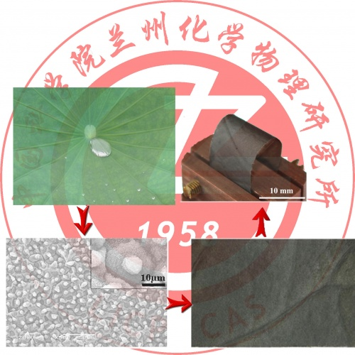 From natural lotus leaf to highly hard-flexible diamond-like carbon surface with superhydrophobic and good tribological perform