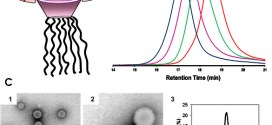 Jellyfish-Shaped Amphiphilic Dendrimers: Synthesis and Formation of Extremely Uniform Aggregates. Advances in Engineering