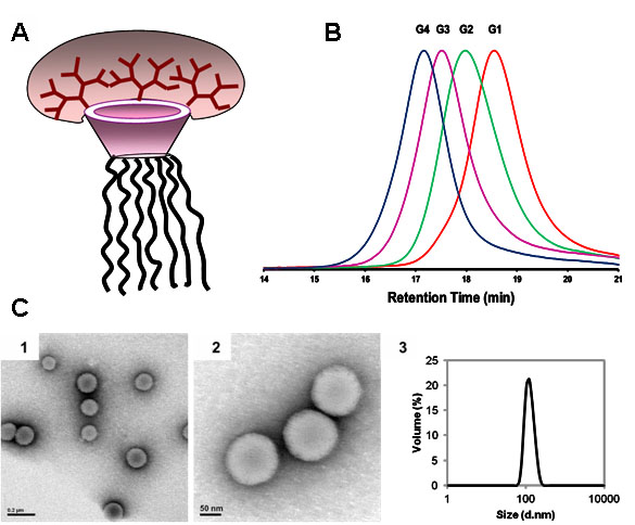 Jellyfish Shaped Amphiphilic Dendrimers  Synthesis and Formation of