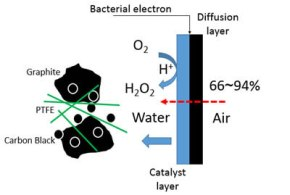 Green Hydrogen Peroxide is Produced by a Novel Carbon Black Graphite Hybrid Air-cathode