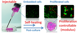 Modulus-regulated 3D-cell proliferation in an injectable self-healing hydrogel - advances in engineering
