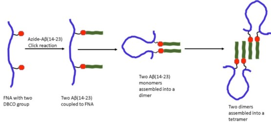 Single-molecule probing of amyloid nano-ensembles using the polymer nanoarray approach. Advances in Engineering