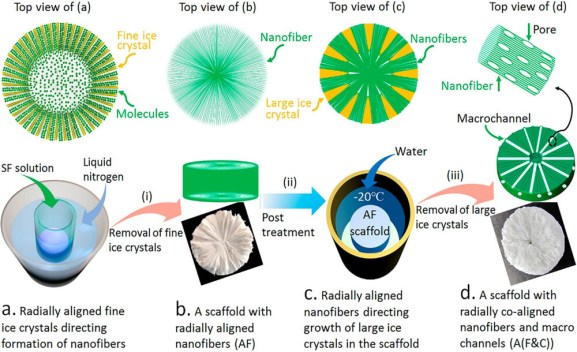 Creating Biomimetic Anisotropic Tissue Engineering Scaffolds with Co-Aligned Nanofibers and Macrochannels by Manipulating Ice Growth - Advanced Engineering