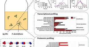 Why is silver nanoparticle toxic: Integrated transcriptional and proteomic analysis - Advances in Engineering