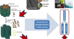 Novel fusants of two and three clostridia for enhanced green production of biobutanol - Advances in Engineering