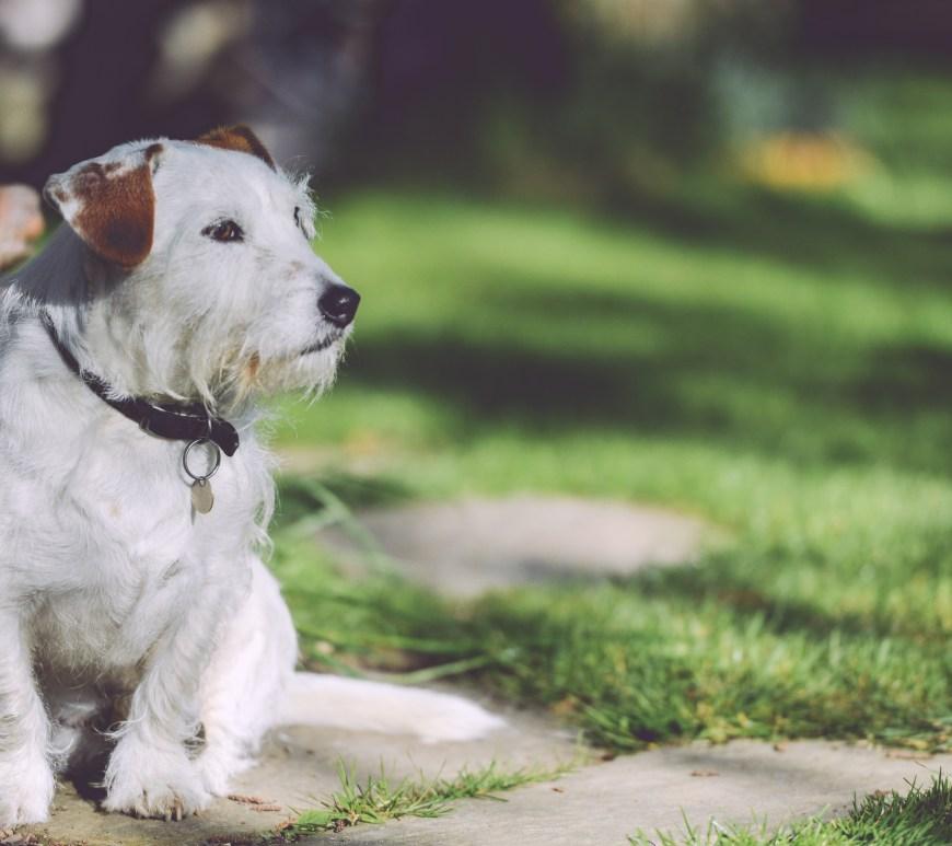 Dog walking outside in a garden