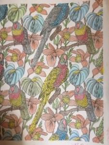 Birds in a coloring book