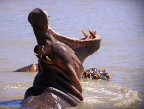 Hippo and Crocodile St Lucia Cruise