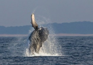 Whale Watching Richards Bay Harbour Cruise