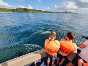 Marine Mammal Educational Dolphin Ocean Cruise