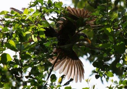 Bird in flight, Hluhluwe