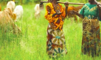FIGHTING POVERTY IN AFRICA: IMPROVING AGRICULTURE PRODUCTIVITY
