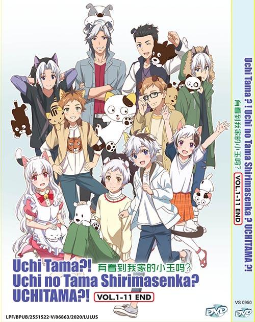 Uchi Tama ?! Uchi No Tama Shirimasenka ? Uchitama ?! Vol.1-11 End DVD