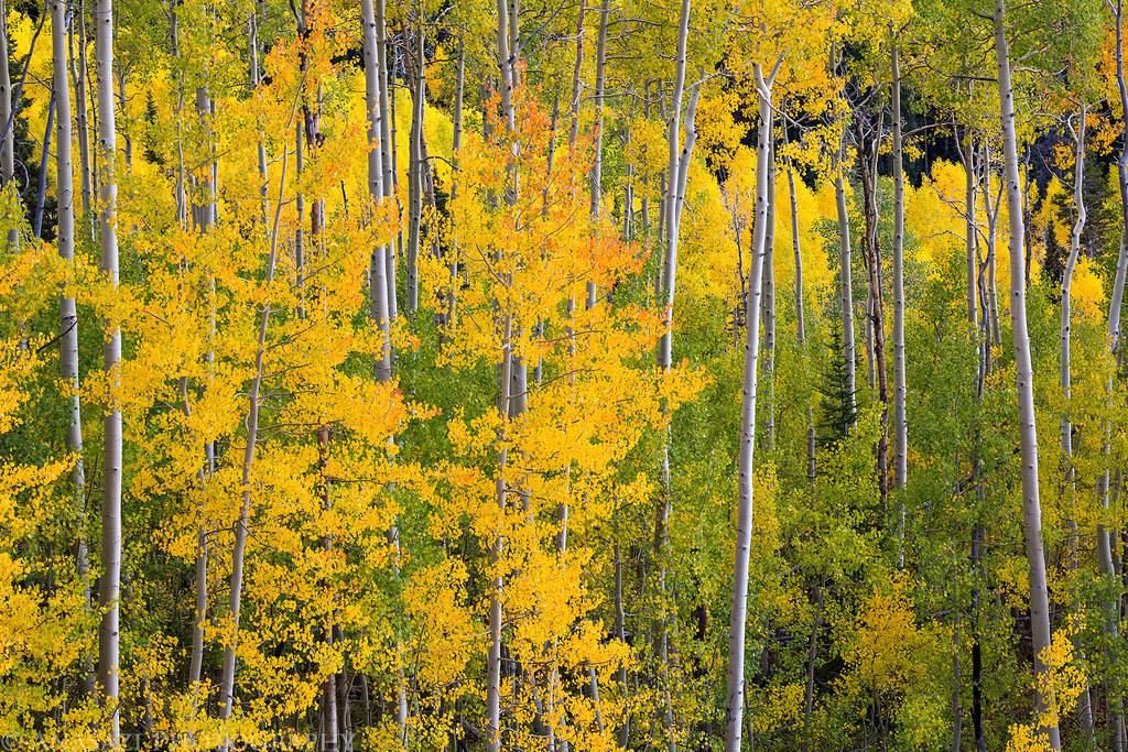 Grand Mesa Fall Colors