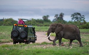 What African Safari Guides Think About Their Customers
