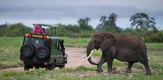 Tourist watching an African elephant while on game drive Amboseli National Park, Kenya. © Africaimagelibrary.com
